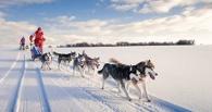 В Омской области пройдут соревнования по езде на собачьих упряжках