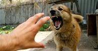 В Омске на уроке физкультуры школьницу покусала собака