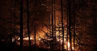 В Омске на борьбу с лесными пожарами выделили 52 млн рублей