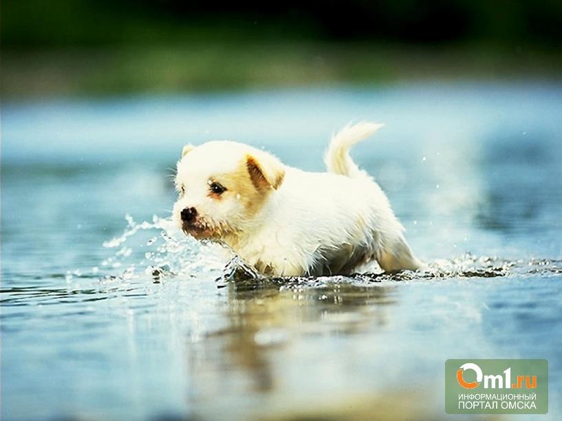 В Омской области рыбак спасал щенка и чуть не утонул