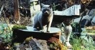 В Омске уничтожили три кладбища домашних животных