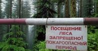 Омичам запретили посещать леса — штрафы до 500 000 рублей