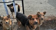 В омском приюте «Друг» голодают животные
