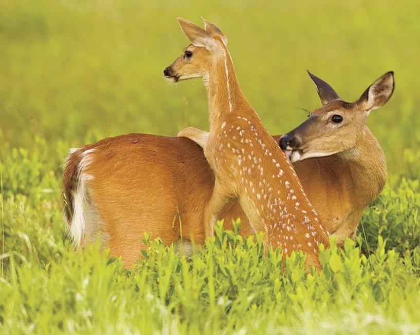 Дело о незаконной охоте в Омской области передано в суд