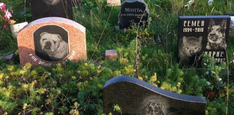 Прокуратура через суд потребовала от мэрии Омска убрать кладбище домашних животных