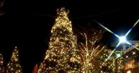 Новогодние елки будут продавать на 160 омских базарах