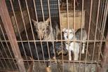 В Омске появился второй «концлагерь для животных»