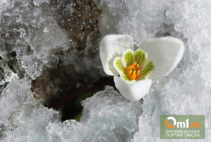 К началу новой недели в Омской области снова пойдет снег