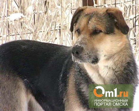 В Омске обнаружился еще один пес Хатико