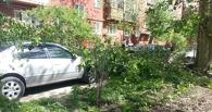 В омском дворе дерево упало на машину