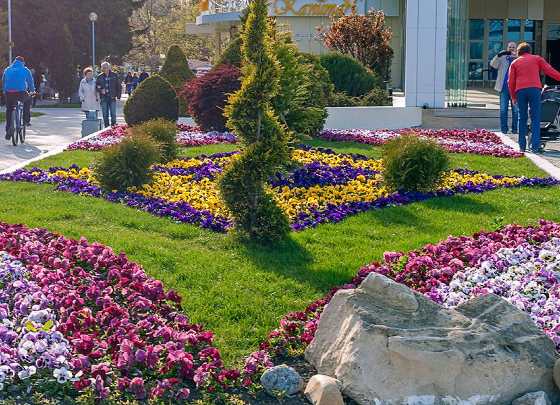 Жители Омска выкапывают цветы прямо с городских клумб