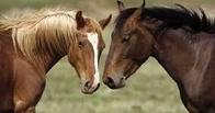 В Омской области украли табун лошадей