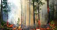 За лесной пожар 17-летнего жителя Омской области ждет суд