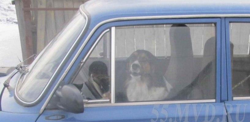 В Омской области пьяный мужчина угнал машину с собакой внутри