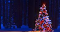Власти Омска определились с местом проведения Главной елки в Новый год