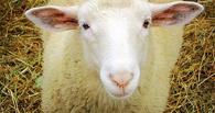 Полицейским, избившим омского фермера после кражи 50 овец, дали реальные сроки