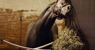 В Омской области из-за гибели лошадей возбудили уголовное дело