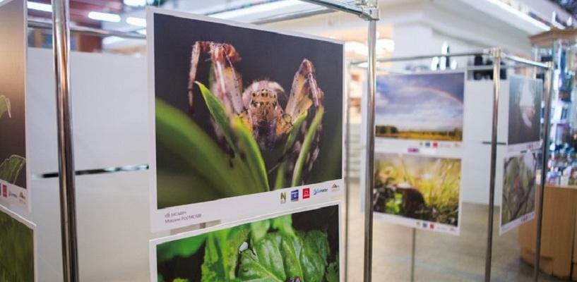 Выставка «Природа смотрит на тебя» открылась в Омске