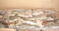 В больнице Омской области нашли рыбу «без документов»