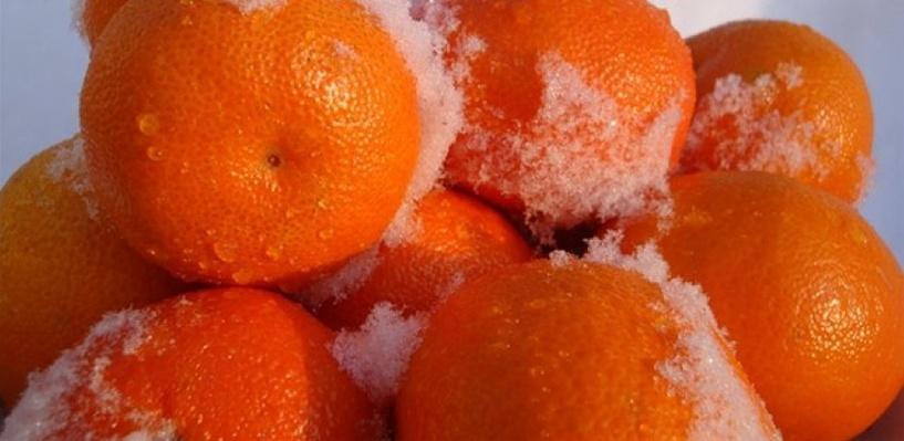 Из Казахстана не пустили в Омск 20 тонн мандаринок