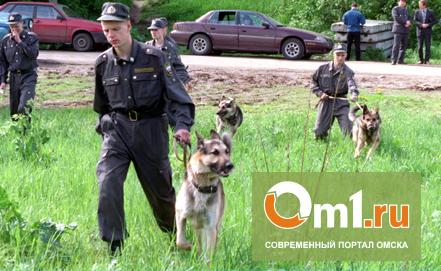 Пропавшего в тайге омича ищут волонтеры и полицейские с собаками