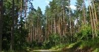Вокруг Омска появится 30-километровый лес из хвойных деревьев.