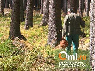 В лесу Омской области спустя 2 дня нашли пропавшего пенсионера-грибника