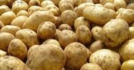 В Омске рухнули цены на капусту и картошку