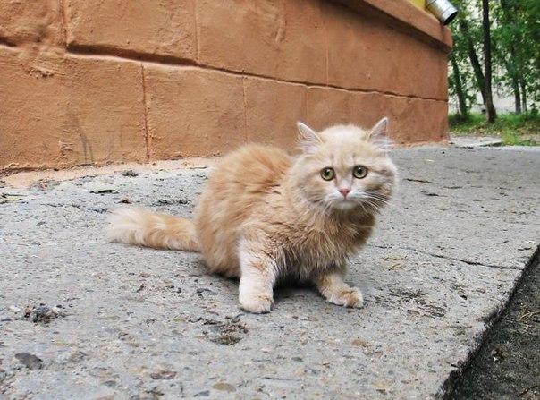 Омича на улице Шебалдина убили из-за котенка