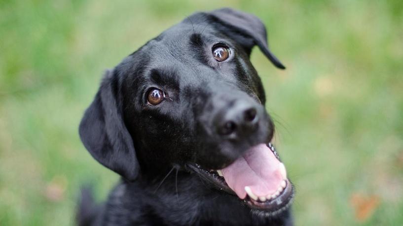 В Омске объявился догхантер: жертвами стали уже больше 10 собак