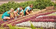 В Амурском посёлке Омска появится спортивный мини-парк
