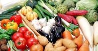 Омские дачники снабдят беженцев Украины овощами