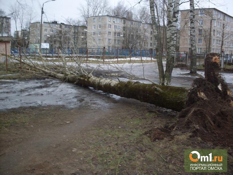 Мэр Омска в штормовых условиях сажал деревья