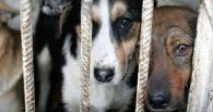 В Омске ограбили приют для животных «Друг»