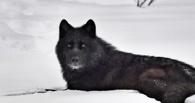 Роспотребнадзор признал факт загрязнения города «черным снегом»