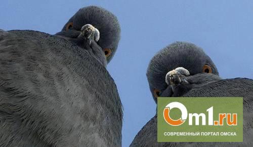 В Омске из поезда Россельхознадзор высадил четырех голубей: они ехали без документов