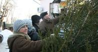 В Омске начали работу елочные базары