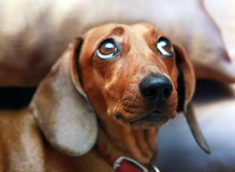 Омские ветеринары выбросили погибшую собаку в мусоропровод
