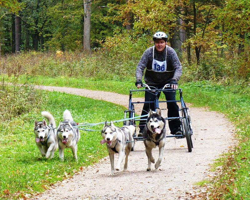 В Омске пройдут ночные и бесснежные гонки на собаках