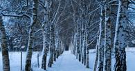 В Омске на территории бывшего Старо-Южного кладбища посадят березы
