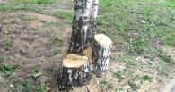В Омске у рынка в Нефтяниках срубили деревья на 1,1 млн рублей