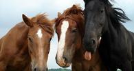 С начала года Лошади на границе Омской области задержали уже трех коней