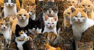 Котики рулят. В Японии нашли остров, где котов в шесть раз больше, чем людей