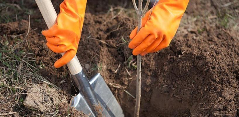 В Омске за 2015 год высажено около 10 000 деревьев и кустарников