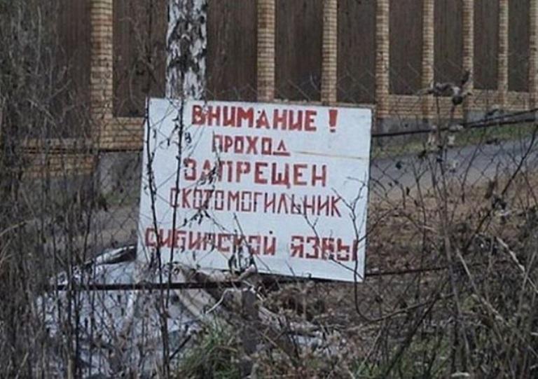 В Омском районе обнаружен скотомогильник с угрозой сибирской язвы