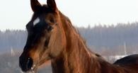 На трассе под Омском иномарка врезалась в лошадь — пострадал ребенок