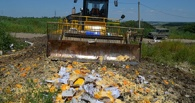Жгут в печах и давят катками: в России уничтожили первые партии санкционных продуктов