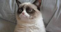 Омичка отсудила у клиники 100 тыс. рублей за неправильную кастрацию кота