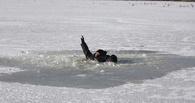 В Омской области рыбак провалился под лед и утонул