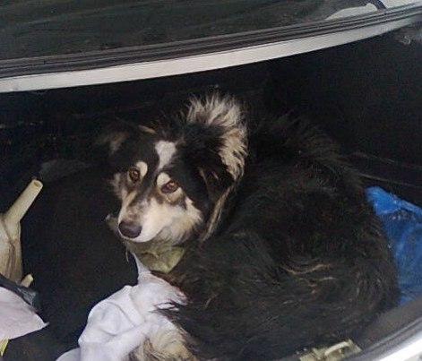 На спасение раненой собаки омичи собрали 20 000 рублей